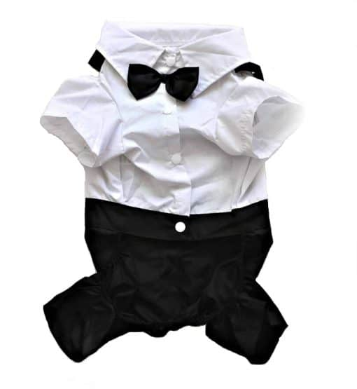 Formal Black And White Dog Tuxedo Front View